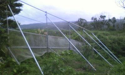 ライム 台風対策