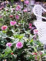 去年の庭2