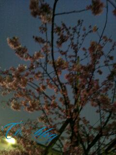 20120323_213956.jpg