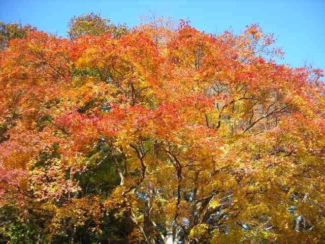 栃木県の隠れた名所,芭蕉のさとの紅葉