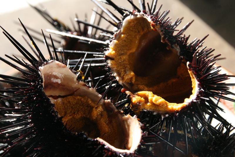 ウニの画像 p1_1