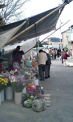 勝浦の朝市
