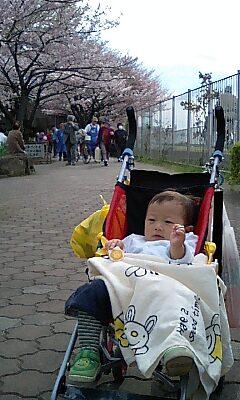 桜がまだ満開ではなかったわ