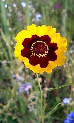 このお花、気に入った。
