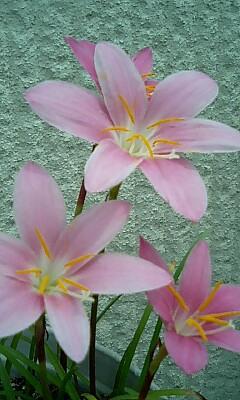 なんの花だっけかなぁ。