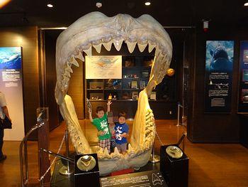 サメ博士の部屋