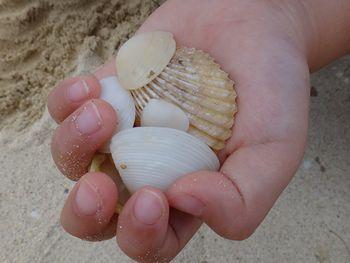 かわいい貝