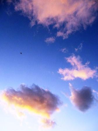 鴉が飛ぶ夕暮れ.jpg