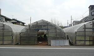 平野農園さん
