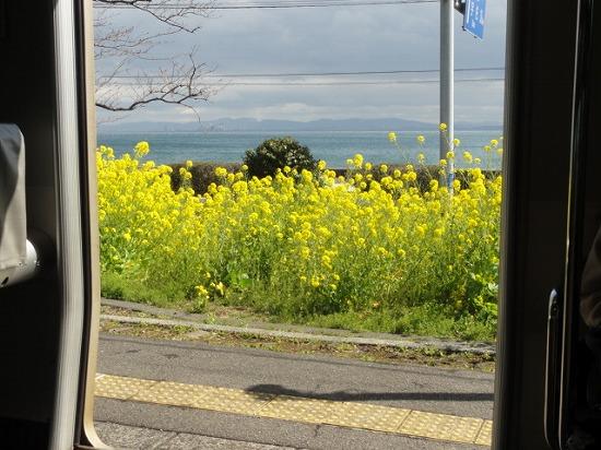 豊後豊岡駅の菜の花