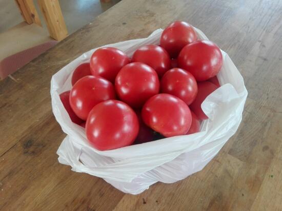 大家さんのトマト