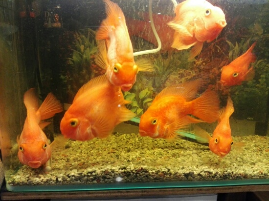 熱帯魚です