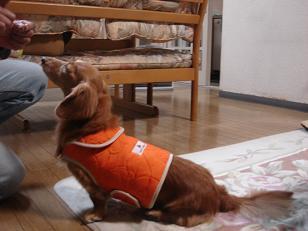 オレンジジャケット