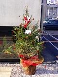 写真はFANAKAの表に飾ってあるクリスマスツリー