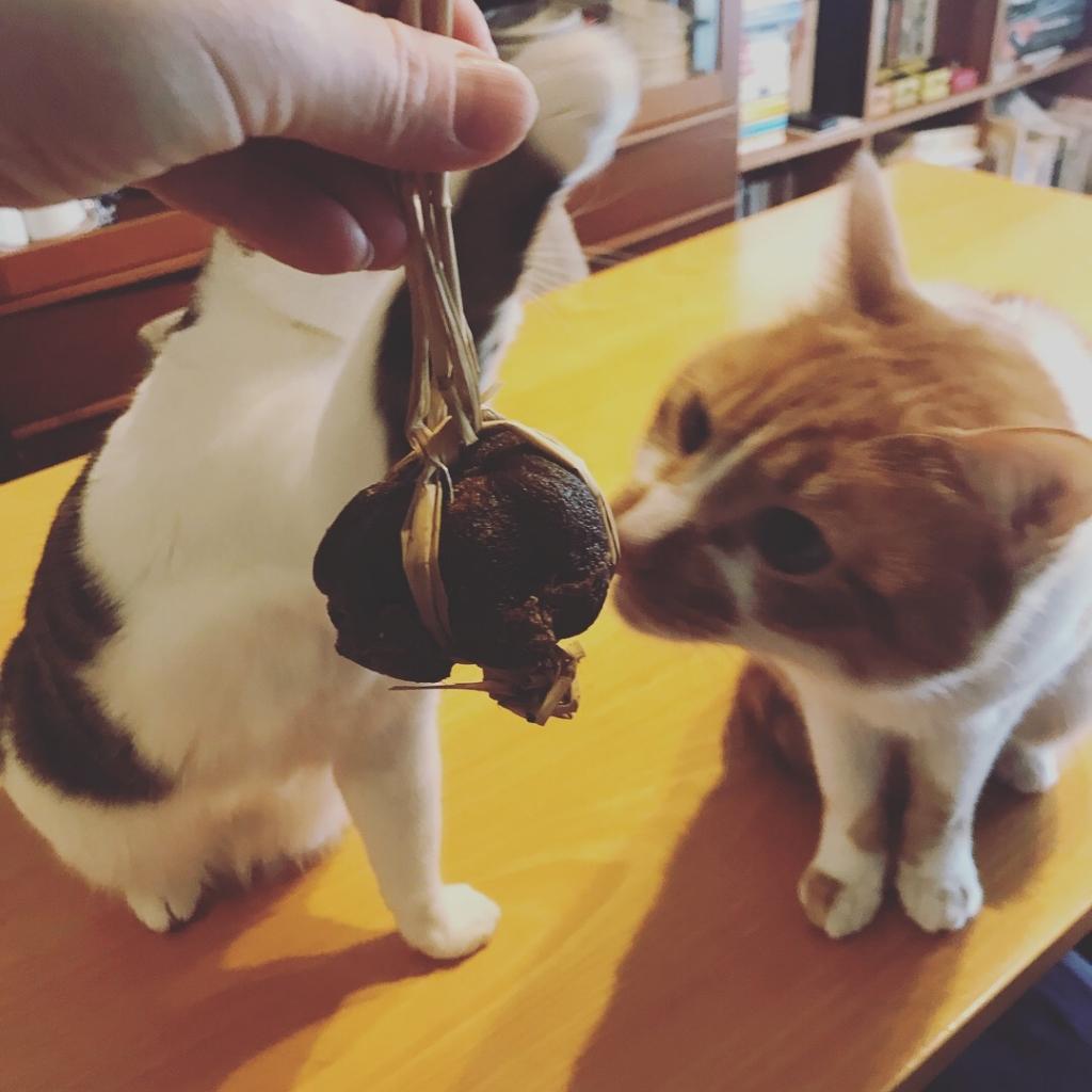 猫と柚べし