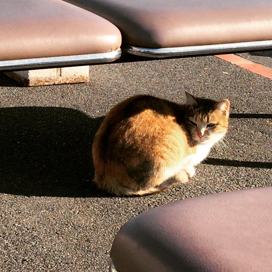 火葬場の猫