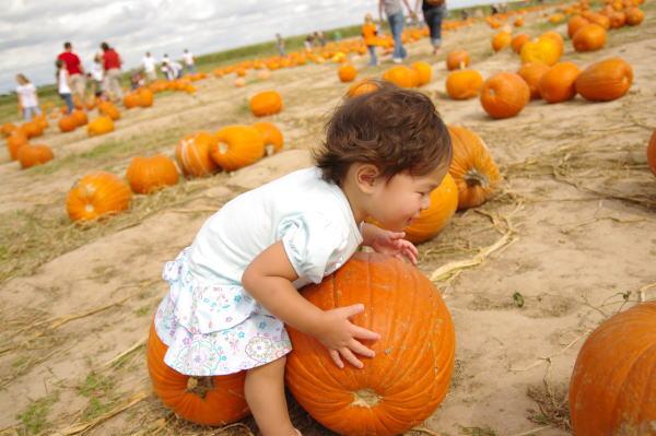 大きなPumpkin