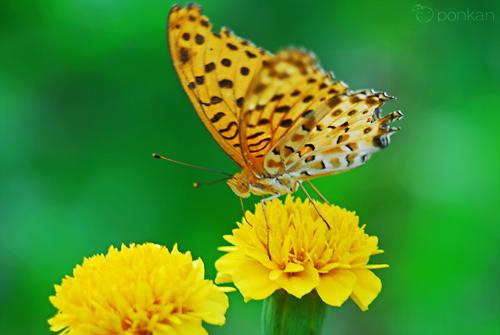 ひさしぶりに花と虫