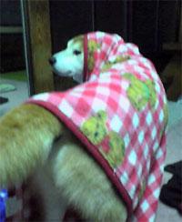 犬も寒いらしい。