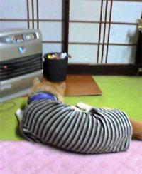 飛良(←犬の名前です)はヒーターが好き。