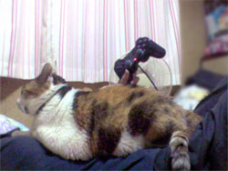 腹の上の猫
