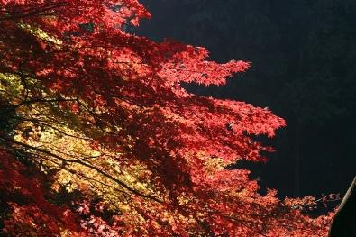 すばらしい紅葉