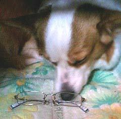 12/30 犬眼鏡1