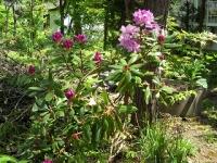 初夏の暖家の庭