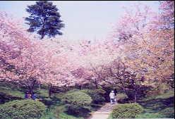 井川 日本国花苑