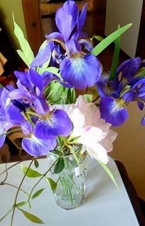 パール柑と、春の花