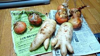 85歳の女性の作った野菜