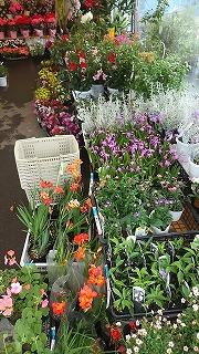 させぼ春の花市開催中