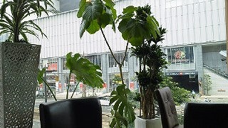 ハートリーフのカフェ