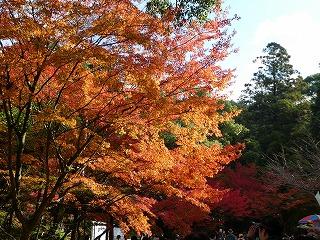 バスツアーで紅葉、黄葉めぐり
