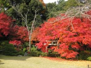 大河内山荘大乗閣庭園の紅葉