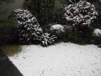 庭の雪 2月11日 8:30