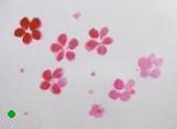 紅で描いた花