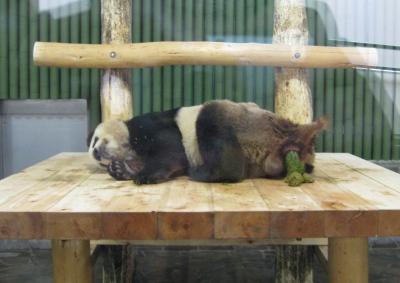 寝ながらうんちするパンダ・コウコウ2