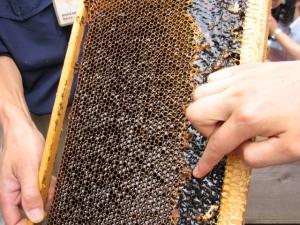 蜜がたまった巣板