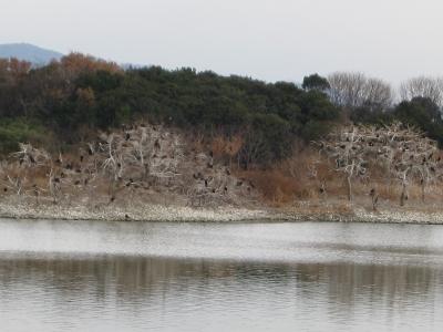 川鵜の糞で白くなった木