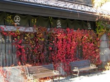 紅葉を背にしたベンチ