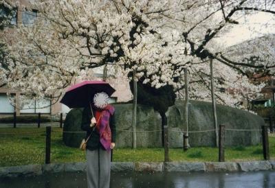 雨に濡れる20年前の石割桜
