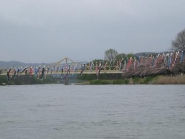 北上川に架かる珊瑚橋と鯉のぼり