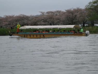 北上展勝地・桜のトンネル、北上川観光遊覧船