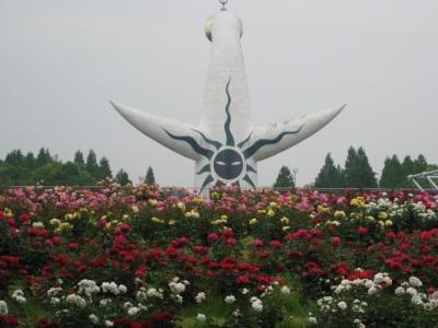 太陽の塔、平和のバラ園