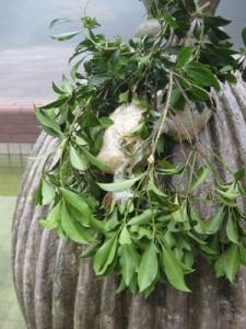 木の枝にモリアオガエルの卵塊
