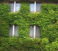倉敷アイビースクエア・ホテル壁面緑化の一部分