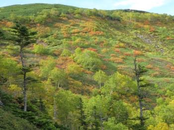 大雪山系の花園の紅葉・黄葉1