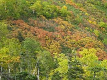 大雪山系の花園の紅葉・黄葉4