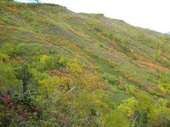 大雪山系の花園の紅葉・黄葉2